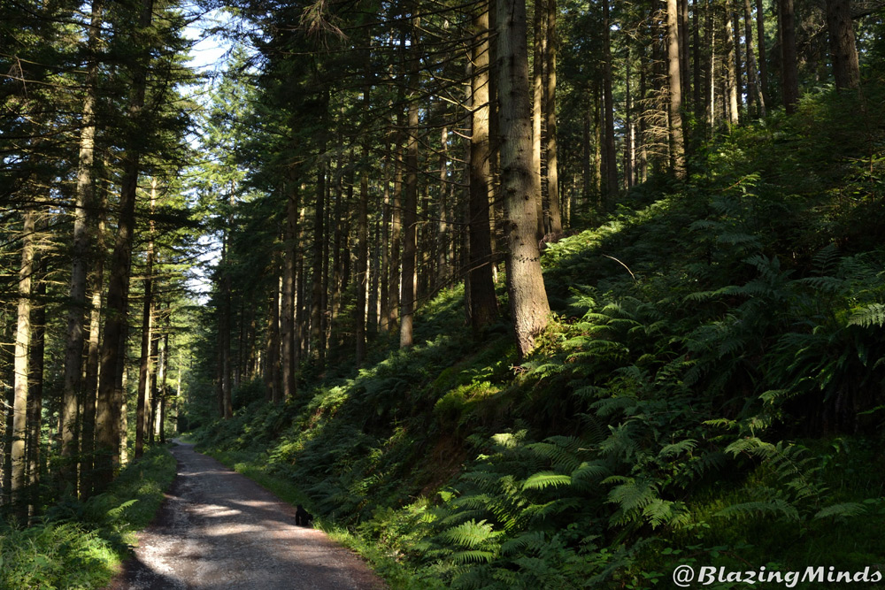 There is nothing better than a nice relaxing walk around Craig Forys in Betws y Coed