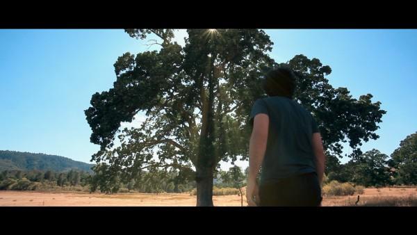 The Lost Tree Thomas Nicholas