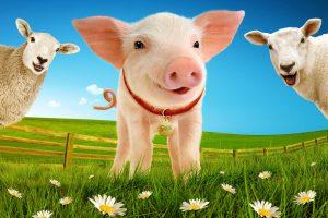 Babe, The Sheep-Pig is Trotting his way to Venue Cymru