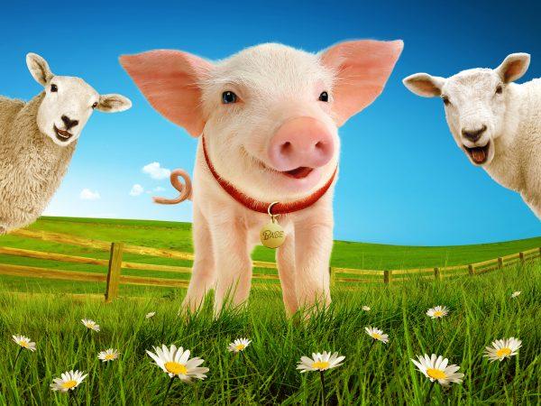 Babe, The Sheep-Big Trots over to Venue Cymru