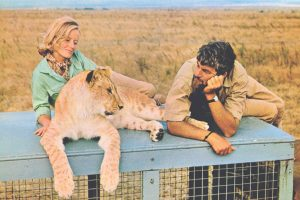 1966 Classic Movie, Born Free, is Making its way to Dual Format (Blu-ray & DVD)